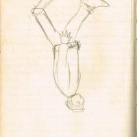 F. 61v. Dibujo